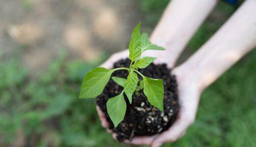 食材宅配サービス各社の【環境への取り組み】をまとめてみました!