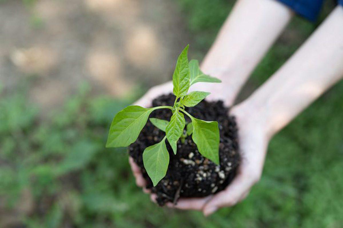 食材宅配サービス環境への取り組み